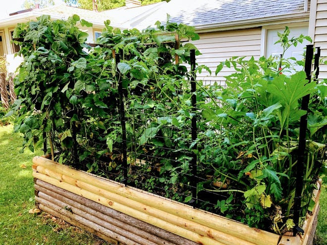 As the weather heats up, vegetables in Jerry Apps' small garden battle for space.