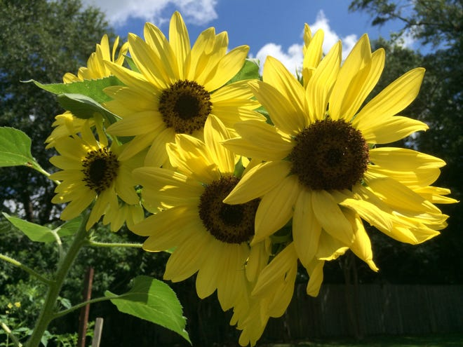 Growing flowers is an easy way to find joy in gardening.