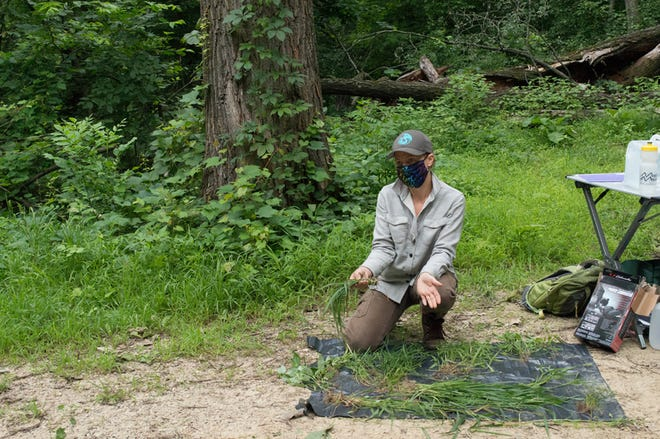 Amanda Weise, a University of Minnesota botanist, shows Wisconsin DNR staff how to identify invasive Japanese stilt grass found on the Coulee Experimental State Forest in La Crosse County.