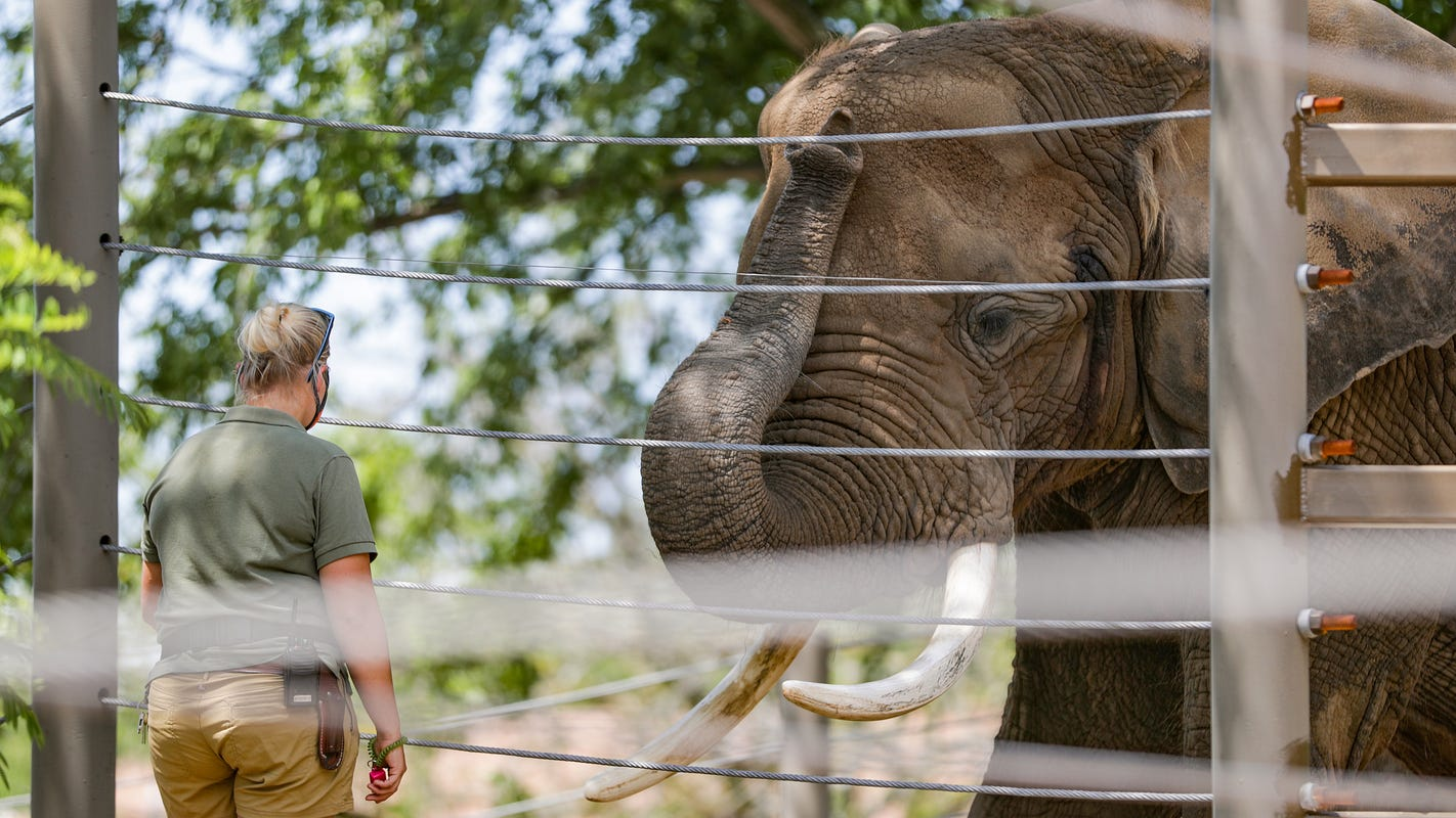 'Devastating' virus killed 2 Indianapolis Zoo elephants. Their deaths may save others.
