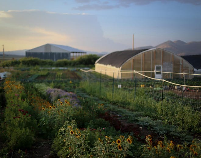 Prema Farm, about 20 miles west of Reno, is offering a virtual tour during Local Food week in Reno, Aug. 9-15, 2020.