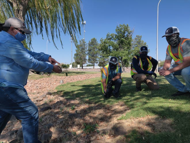 Leslie Beck explains to YCC youth associates — from left to right, Christian Goff, Nicolas Trujillo and Travis Rogers — how the simple morning glory can be a pest to local chile farmers. The LCU program allows the youths to get a sense of how landscape management can have a larger impact on the economic issues in a community.