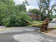 Several trees were uprooted, damaging apartments and vehicles in Greenville.