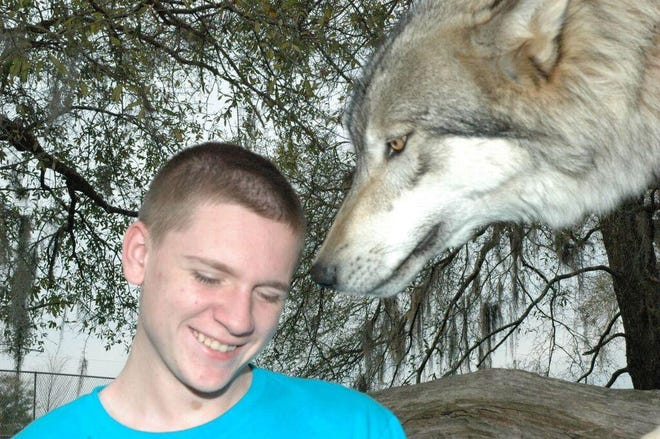 A teenager meets one of the wolves at Seacrest Wolf Preserve.
