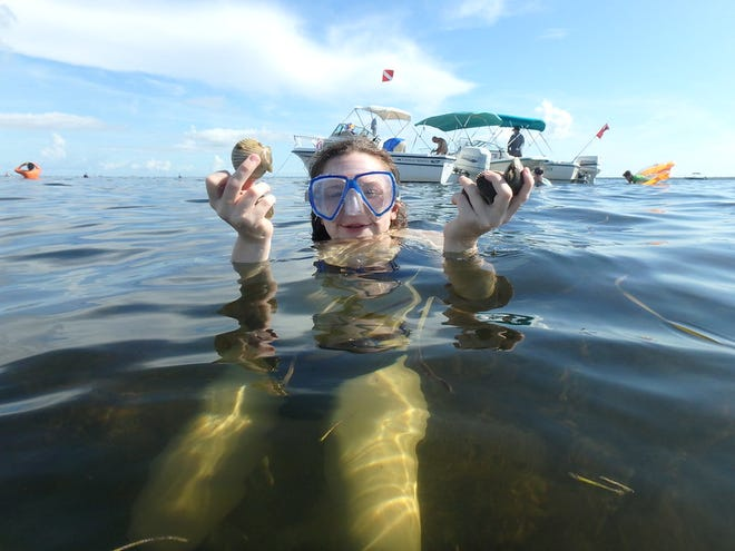 Scallop season in St. Joseph Bay opens in August. To support future scallop populations, return scallops smaller than 1 1/2 inches.