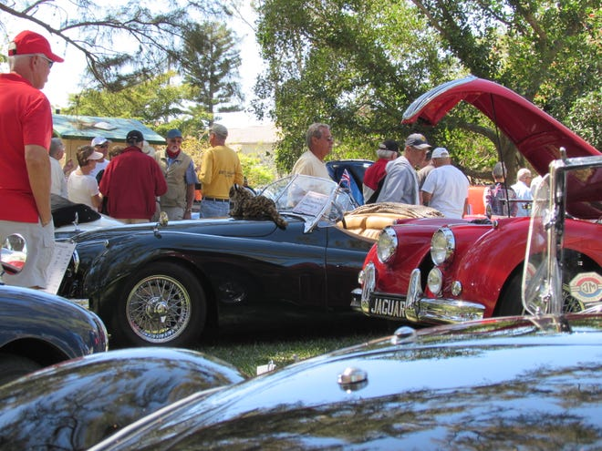 British Jaguar cars draw some attention at The B.I.G. European Car Show at Jaycee Park in Cape Coral. The show features British, Italian and German cars each March. The 2020 show was canceled due to the coronavirus pandemic.