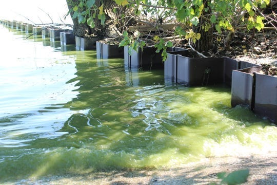 This year's Lake Erie harmful algal bloom season has been relatively mild compared to 2019, when surface scum like this could been seen in the waters off of Magee Marsh Wildlife Area in Ottawa County.  Researchers reported in July that they expect western Lake Erie's harmful algal blooms (HAB) to reach 4.5 on the NOAA severity index.  In 2019, Lake Erie's harmful algal bloom rated 7.3 on a severity index of 1-10.