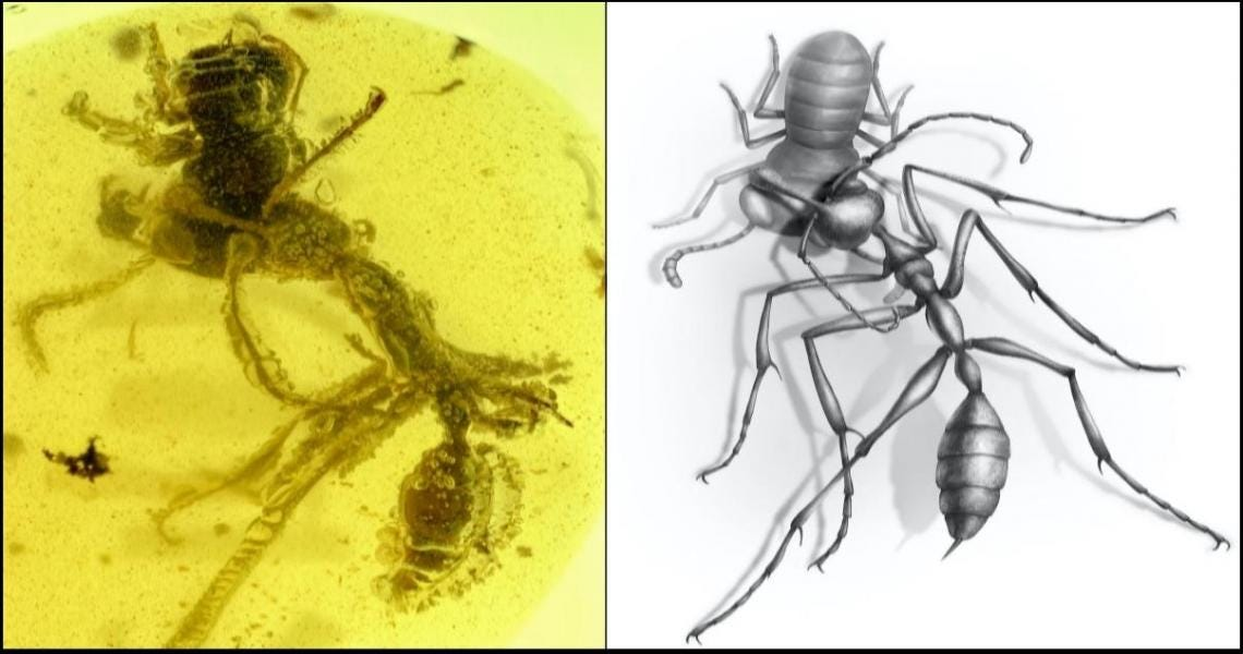 Fossil of fearsome  hell ant  that used tusk-like jaws to hunt its victims discovered in amber