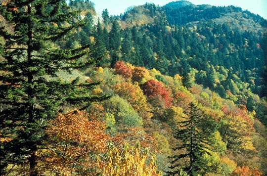 """""""It's possible to walk among a grove of trees that have been there 200 years or more. Some are as tall as the Statue of Liberty,"""" Hoff says of Great Smoky Mountains National Park. """"There are more species of trees in the park than in all of Europe."""""""