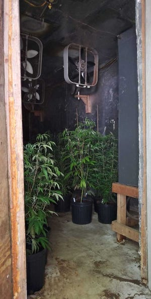 An illegal marijuana grow house was discovered in Clermont.