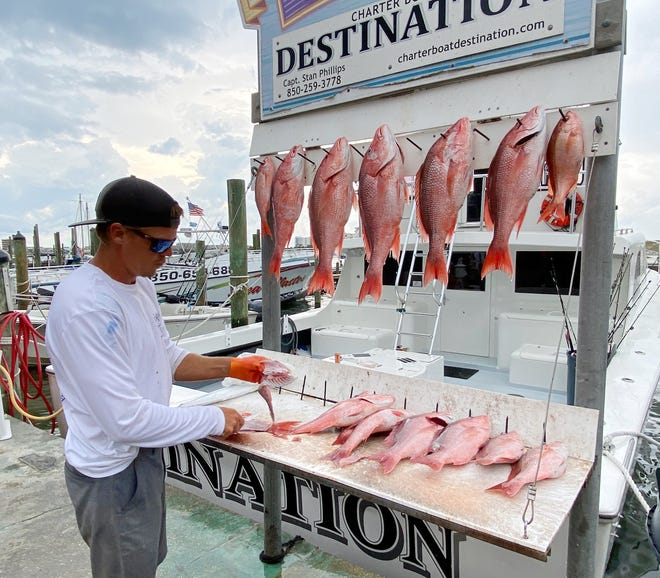 Deckhand Justin Taylor on the charter boat Destination with Capt. Stan Phillips cleans up one of the many red snapper catches this past season. Destin charters had 62 days to land snapper.