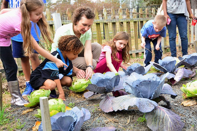 Amy Stidham teaches children how to keep cabbage crops healthy at Cape Fear Botanical Garden. Stidham also teaches classes for soldiers and senior veterans. (Contributed photo)