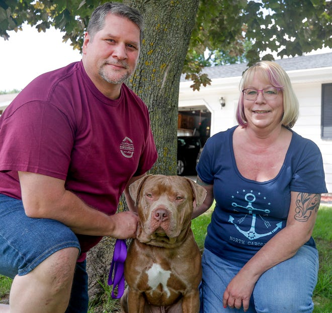 Timothy and Molly Kinney of Green Bay adopted Cheech from the Wisconsin Humane Society Green Bay Campus at the end of July. Local shelters and rescue groups are seeing an increase in pet adoptions during the pandemic.