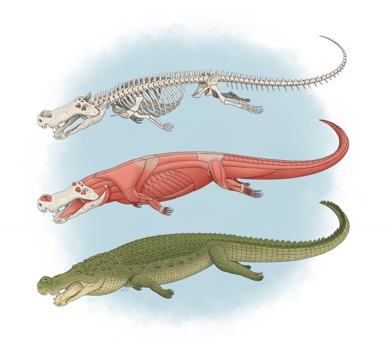 Prehistoric  terror crocodiles  had  teeth the size of bananas