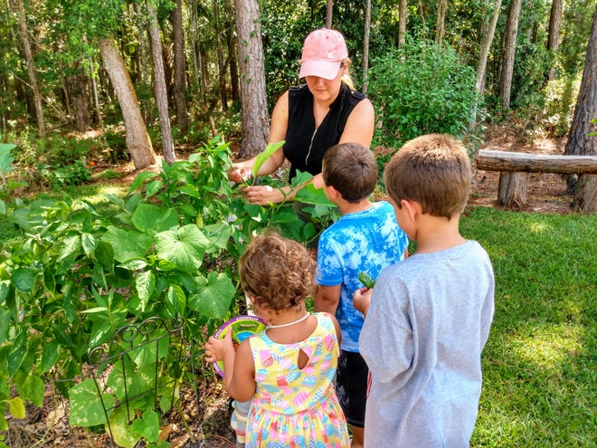 Resources are available for parents to bring the environment into their home classrooms, and their students into the environment. [Candace Barone/UF/IFAS]