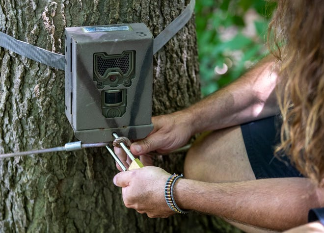 Travis Ryan, biology professor at Butler University, locks up a trail camera in a woody spot of Indianapolis, Thursday, July 23, 2020.