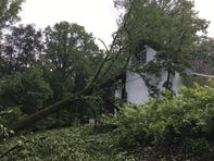 Mount Cuba Nature Center sustained significant damage during Friday nights storm. The botanical gardens and natural lands saw hundreds of trees downed and flooding in several buildings.