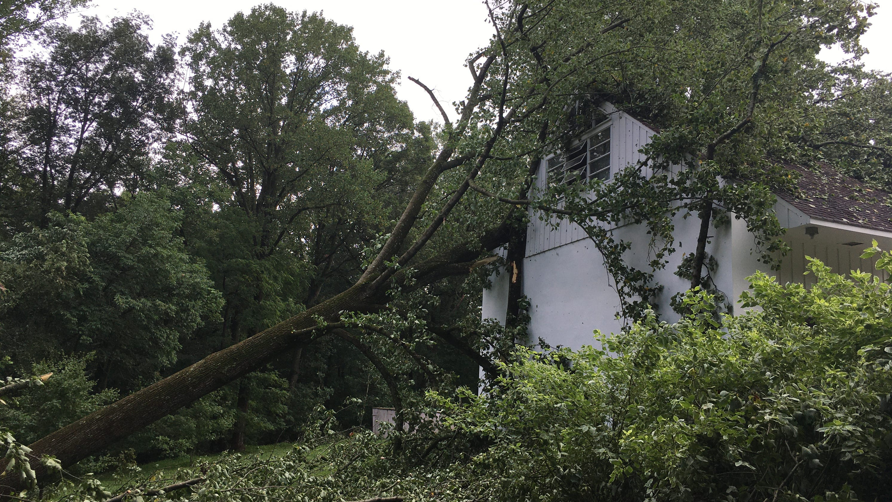 Storm damage included historic trees at Mount Cuba
