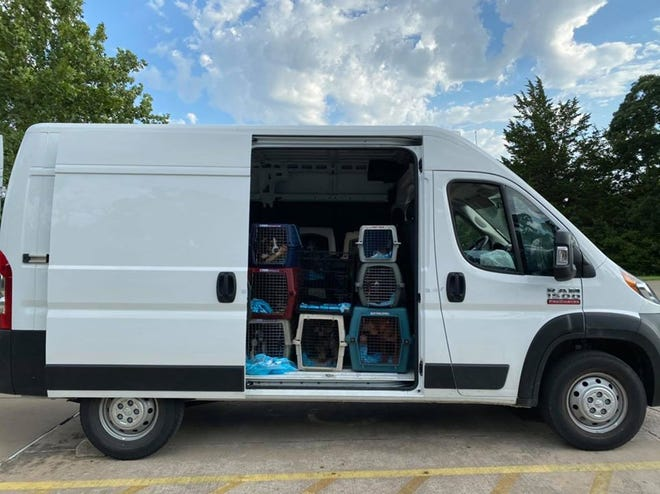 Dogs at the Ardmore Animal Shelter are loaded into a van headed for Iowa and Illinois. The shelter has sent 46 dogs to rescue agencies in other states over the past week.