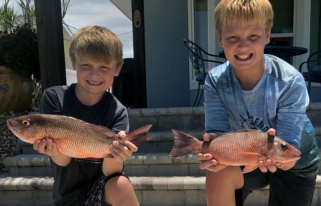 Jarret Williams, 9, left, and his brother Braden Williams, 12, of Bradenton caught these keeper size mangrove snapper while fishing lower Tampa Bay with Capt. John Gunter of Off The Hook Charters this week. [ PROVIDED BY CAPT. JOHN GUNTER ]