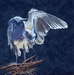 """""""Preening"""" by Hanneke Jevons (Contributed photo)"""