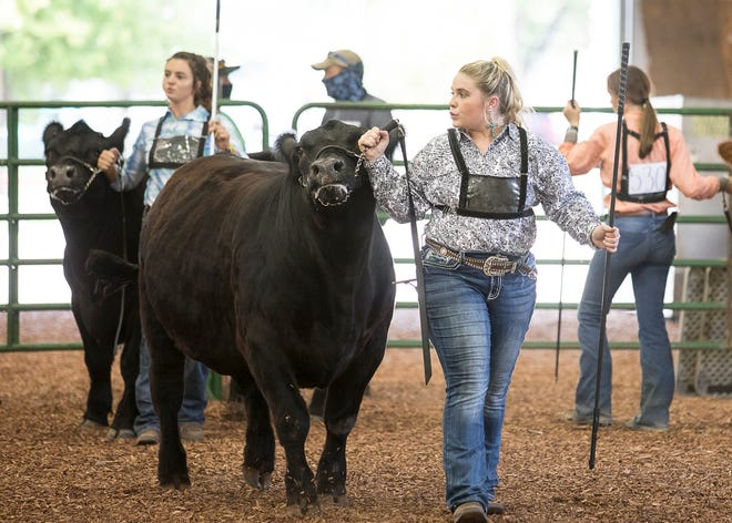 Ally Graham, 18, was a 10-year member of the Clarksburg Jolly Beef Feeders. She started 4-H when she was eight years old and began showing market hogs before realizing her passion for steer.