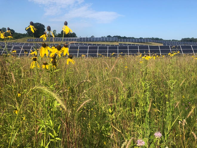 Prairie coneflower and bee balm are among the pollinator-friendly plants growing at Enel Green Power's solar farm in Minnesota.