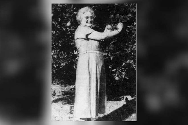 Janie Stackhouse in her orange grove near Avon Park. She later was murdered. [PROVIDED PHOTO/TAMPA BAY TIMES]