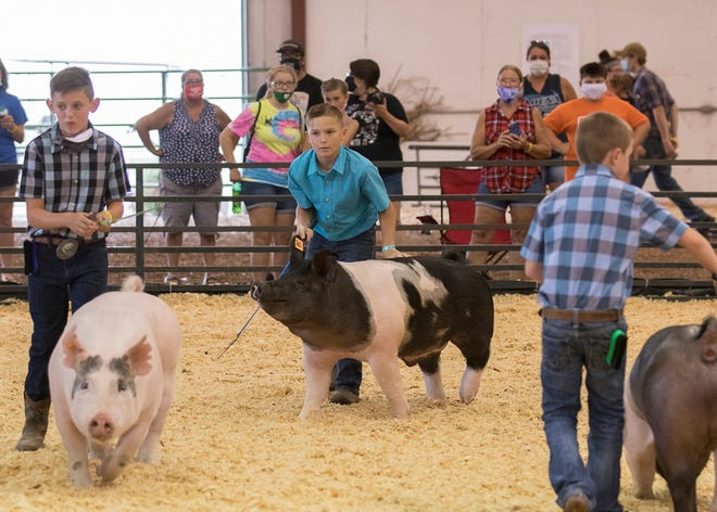 Levi Beam, who has been showing swine for the past three years, says one of the ways a pig is easy to work with is if they are comfortable and they build a relationship while training.