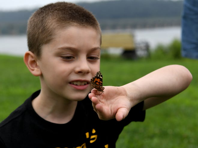 Dominic Regala, 8 of New Freedom watches his Pearl crescent butterfly prepare to fly away during a benefit forsuicide prevention, Sunday, August 16, 2020 at John Wright Restaurant in  Wrightsville. This was the second annual butterfly release to benefit the Bartz Brigade, a community based nonprofit organization that is named after Trent Bartz, a 20-year-old soldier who committed suicide August 19, 2015.John A. Pavoncello photo