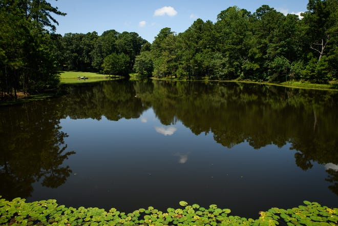 A large pond is part of the scenery on the Cape Fear River Trail.