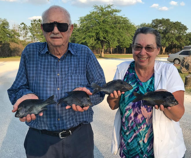 Lakeland residents John Weaver and his wife Peggy caught these bluegill at Tenoroc Fish Management Area recently. [ PROVIDED BY PAOLO PECORA/FWC ]