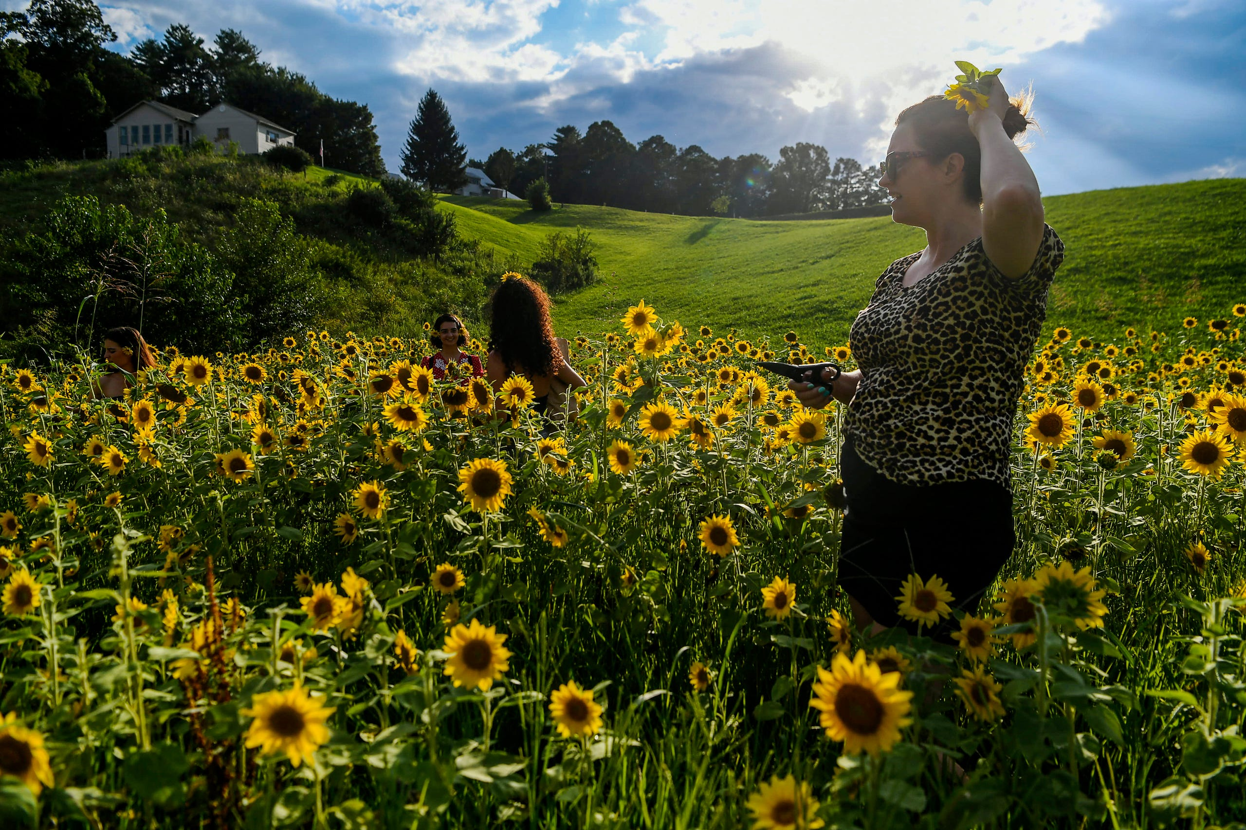 """Holly Mason places a sunflower in her hair at Olivette Farm as she prepares to """"flower bomb"""" Craggy Bridge in Woodfin August 19, 2020."""