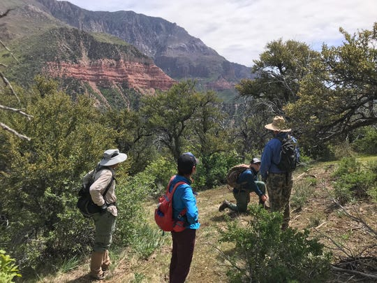 Volunteers scout locations for the Spring Hollow trail network on the side of the Pine Valley Mountains above St. George.