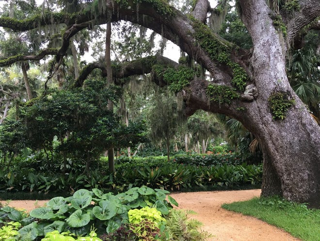 While the Sabal palmetto is the state tree of Florida, residents of the Florida Panhandle may consider live oak trees and Spanish moss more as symbols of home.