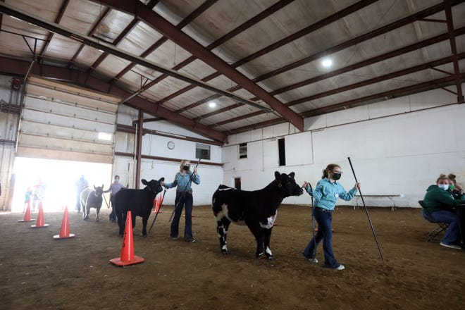 The Muskingum County Youth Livestock Expo was held this week to replace aspects of the Muskingum County Fair. Youngsters showed livestock over four days, including cattle and dairy on Wednesday.