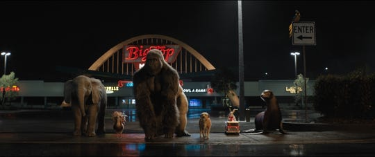 "The gorilla Ivan (center, voiced by Sam Rockwell) leads an animal escape with his friends – elephant Ruby (Brooklynn Prince), chicken Henrietta (Chaka Khan), stray dog Bob (Danny DeVito), rabbit Murphy (Ron Funches), seal Frankie (Mike White) and parrot Thelma (Phillipa Soo) – in ""The One and Only Ivan."""