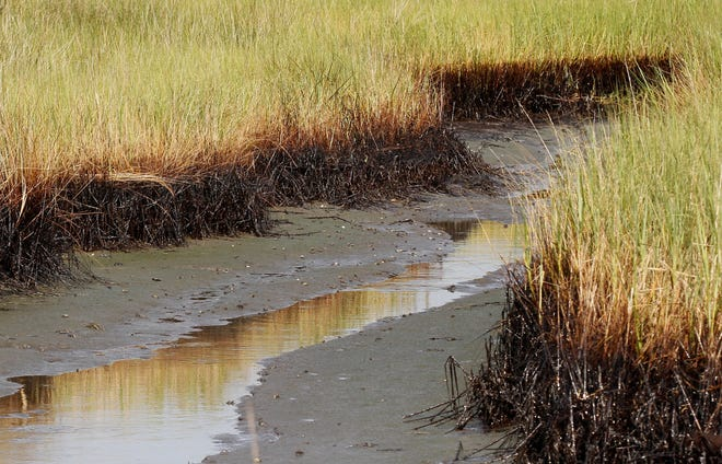 In this 2010 file photo, a ribbon of oil lines the bottom stalks of marsh grass at low tide in a cove in Barataria Bay on the coast of Louisiana.