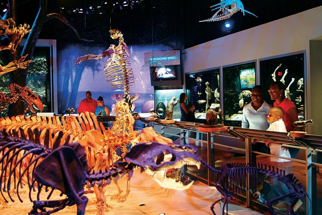 "Florida Museum of Natural History visitors view skeletons and other fossils in the ""Hall of Florida Fossils: Evolution of Life and Land"" permanent exhibit in this file photo. The museum has reopened its permanent exhibits to the public. [File]"