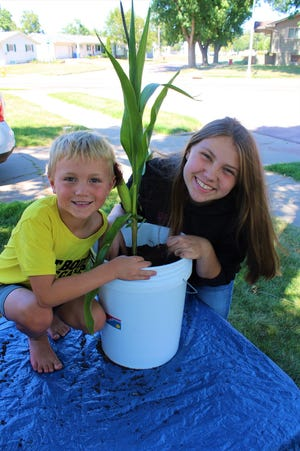 Jackson Theisen, 6, and Madison Theisen, 13, pose next to Cornelia, previously known as the 57th Street corn, after helping transplant it into a five gallon bucket Wednesday. The plant was uprooted by an unknown culprit earlier in the week.