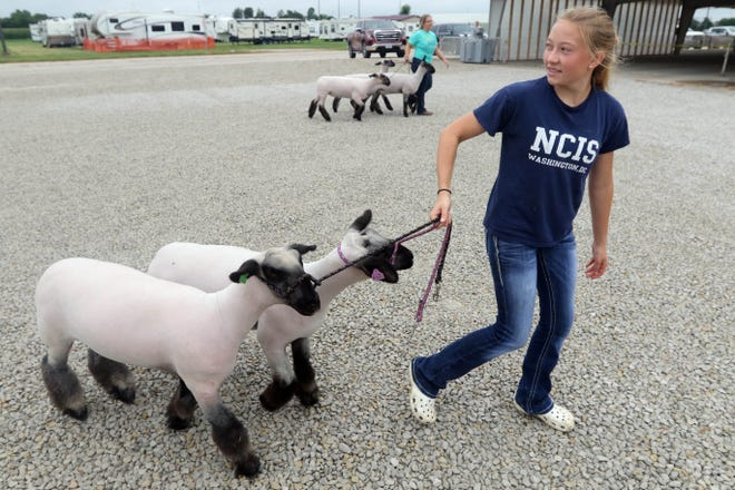 Brooklyn Moehle, 16, of Mediapolis with her sheep July 27 during the Des Moines County Fair  in West Burlington.