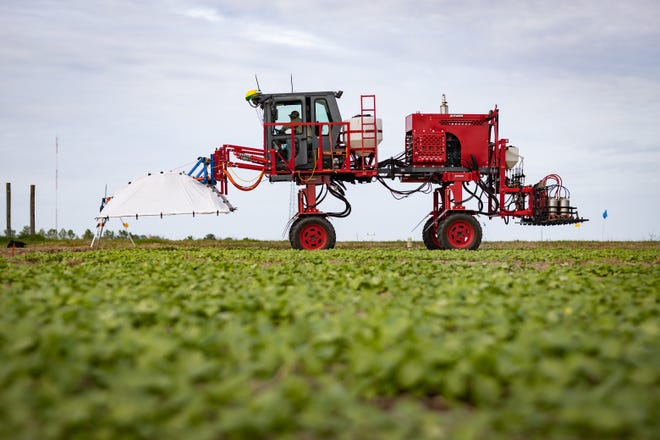 The Phenogator at the UF/IFAS North Florida Research and Education Center collects data in the field that can later be analyzed using artificial intelligence.