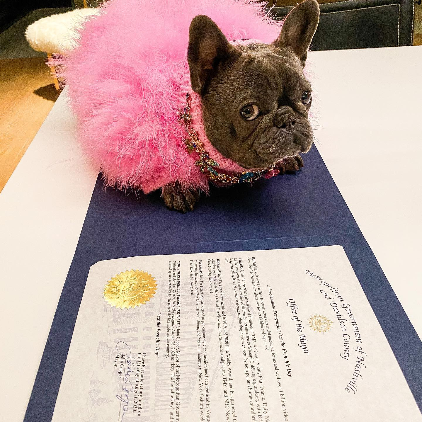 Izzy The Frenchie Gets Her Own Day In Her Hometown Of Nashville