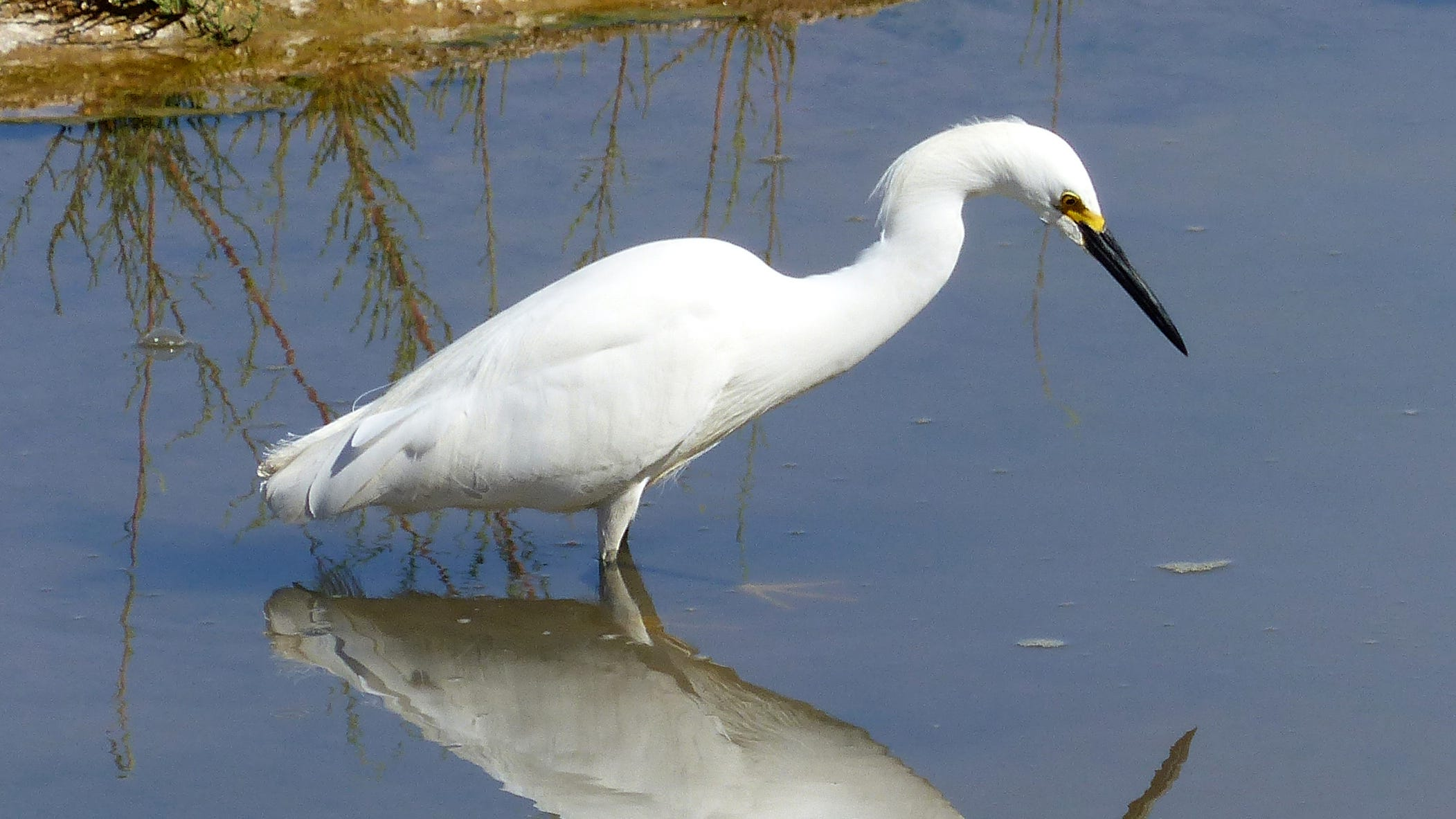 Area Watering Holes Wetlands Vital To Wading Birds