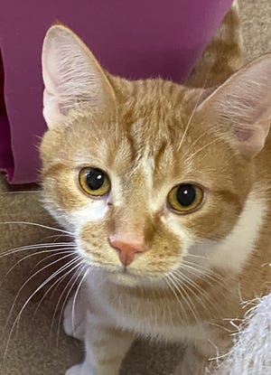 Emerson (and his brother) are looking for a new family to adopt. They are waiting at the Oshkosh Area Humane Society.