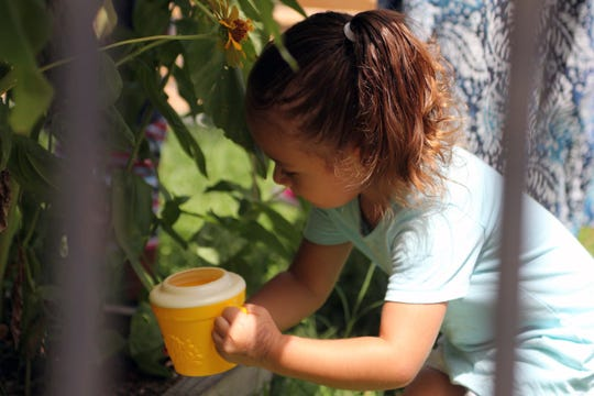 A child waters a mammoth sunflower at one of the Sweet Briar Child Development Center locations in Austin, Texas. The center is following rigorous cleaning protocols to stave off the coronavirus.