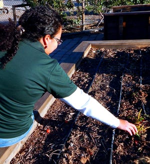 Sara Moran, New Mexico State University Extension horticulture agent in Bernalillo County prepares a winter garden bed. Moran and other Extension agents and specialist will host a twice-monthly gardening series beginning Wednesday, Sept.2.