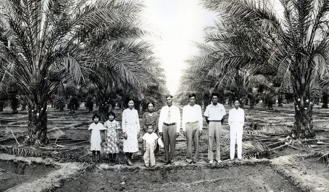 The Kitagawa family in a date grove.