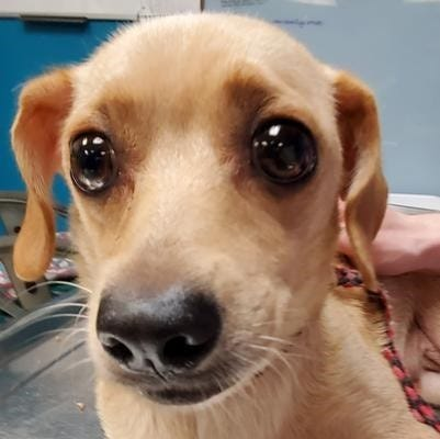 "Sheebe is one of the four dogs that South Jersey Regional Animal Shelter recently took in. They all need to be rehomed because ""their owner had been incapacitated and could not return to the home."""