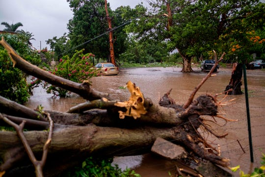 A flooded area and a downed tree caused by Tropical Storm Laura in Salinas, Puerto Rico.